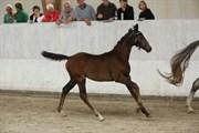 Hest til salg - BJØRNMOSE'S D´RUBINA