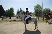 Hest til salg - SIMBA