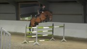 Hest til salg - Whitaker / Voltaier / Nimmerdor