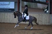 Hest til salg - FRITS