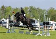 Hest til salg - Fenja