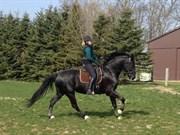 Hest til salg - Q-BEC BENNEDSGAARD