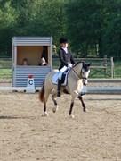 Hest til salg - KORREBORG'S CHABLIS