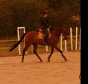 Hest til salg - Bournonville (Bono)