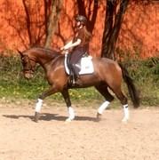 Hest til salg - LORD ZACARIN