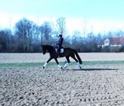 Hest til salg - BROOKLYN