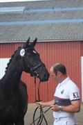 Hest til salg - CEZINA R