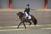 Hest til salg - TARZAN