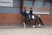 Hest til salg - HUDSON