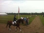 Hest til salg - NEPHEW