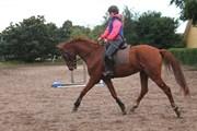 Hest til salg - Kielsgaardens Prince Maybe
