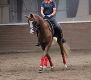 Hest til salg - KROHNS SUPER SONIC