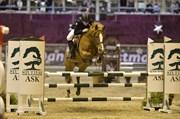 Hest til salg - BIBI