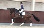 Hest til salg - 50 - RINGSBO'S ZACKXOBEAT