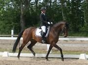Hest til salg - COCO CHANEL