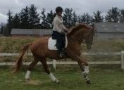 Hest til salg - WYOMING