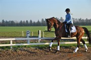 Hest til salg - SLE'S HARLEY