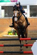 Hest til salg - AMAYZING GOLD