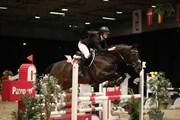 Hest til salg - NØDELUNDEN´S GLADIATOR