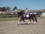 Hest til salg - RODINIA ROSE