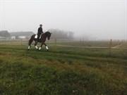 Hest til salg - ASKOV'S HOT KIMANN