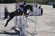 Hest til salg - Cavall