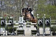 Hest til salg - BLIKSEM
