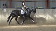 Hest til salg - OPAL
