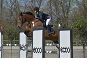 Hest til salg - RUSSIE