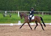Hest til salg - LE FURIEUX
