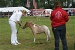 Hest til salg - HIGHLIGHT LB TINY FLAME