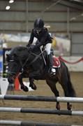 Hest til salg - SKOVSLANDS ASTERIX