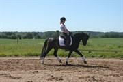 Hest til salg - ELMHOLTS PELÉE