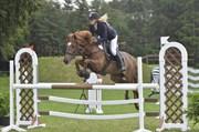 Hest til salg - SKOVLY'S FELIX
