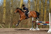 Hest til salg - CAMMELOT