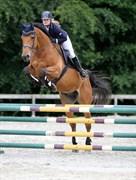 Hest til salg - Voldstrups Collin