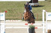 Hest til salg - Jumani