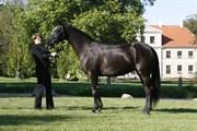 Hest til salg - FEINE FILIPPA V