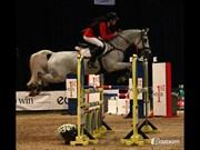 Hest til salg - AMIGO