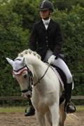 Hest til salg - Milano Højgård
