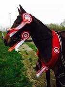 Hest til salg - JUMPER
