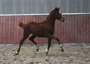 Hest til salg - GØRKLINTGÅRDS SILAGRO