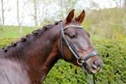 Hest til salg - Strandgaards Let's Dance