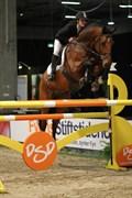 Hest til salg - MANGO