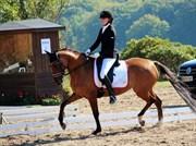 Hest til salg - DREAMGIRL