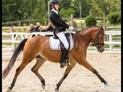 Hest til salg - ROLSTEDS VIOLA