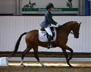 Hest til salg - HM PERFECTION