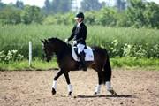 Hest til salg - HOLMENS ISABELLA