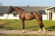 Hest til salg - Mango E