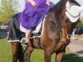 Hest til salg - COLUMBUS B